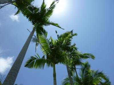 沖縄ぶらり旅