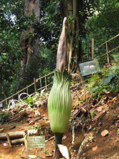 2012夏22 インドネシア(ボゴール)