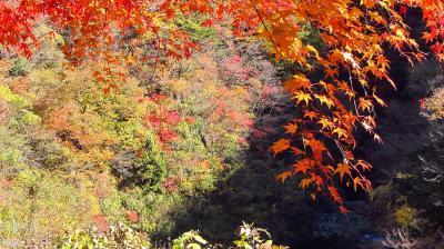絶景の紅葉を愛でる~奥多摩むかしみち~