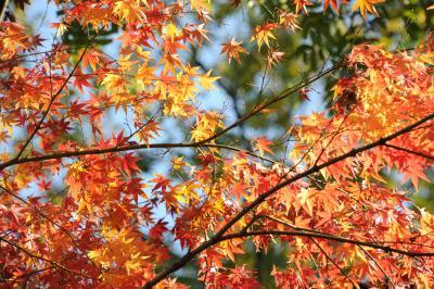 小石川植物園で紅葉を楽しむ