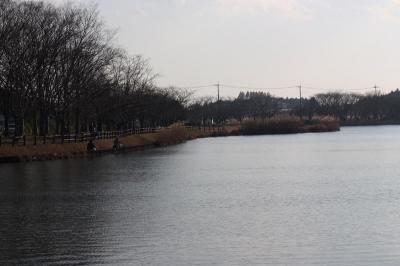 乙戸沼公園でバードウォッチング [2012](2)
