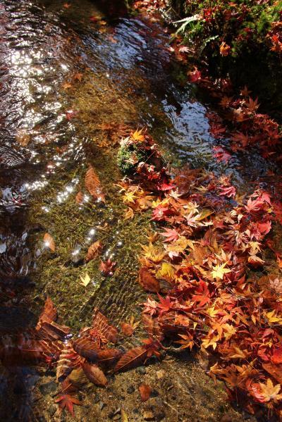 2012年11月の京都 紅葉三昧 最終日は鷹峰から