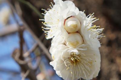 チャリで巡る東京墓マイラー   青山霊園に眠る偉人たち vol.1