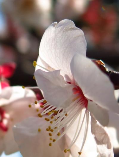 春はもうそこまで 多摩川散歩