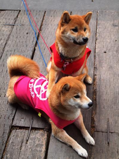 神奈川/久々の箱根で春を自由を楽しもう@ハーヴェストクラブ箱根甲子園(2013年3月)