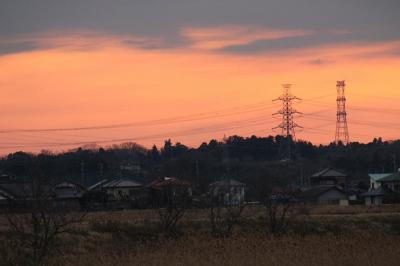 江戸崎でバードウォッチング [2013](1)