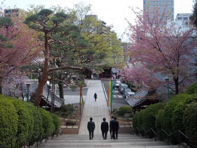 「桜咲く! 護国寺・境内 & 小石川・界隈 (文京区)」 を 『 東京散歩・・・で ひと巡り 』。