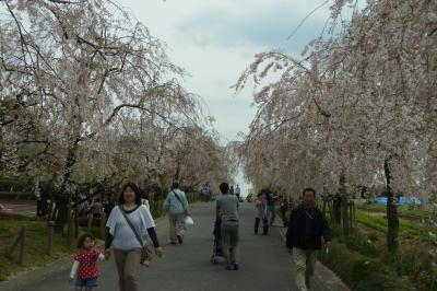 ずっと読めなかった東谷山フルーツパークで、今年最後の桜を楽しみながら思い切り遊ぶの巻