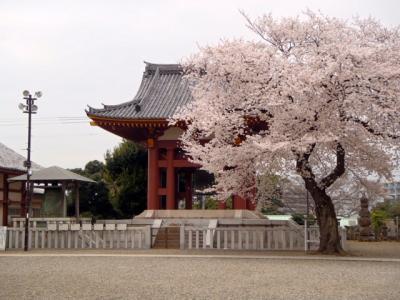 桜の盛りにお引っ越し