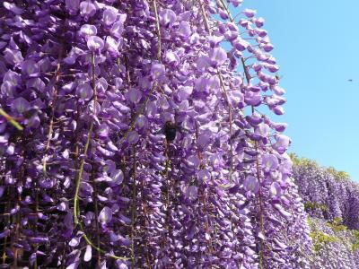 京都の花巡り 2013年 ②