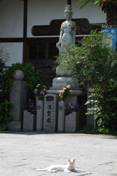 ★ちょこっと塩竈・松島 その1 ーしおがまさま とか 猫寺とか。★