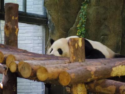 上海野生動物園(西安上海の旅7日目~8日目帰国)
