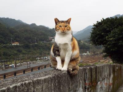 台湾猫村 台北平渓線 昭和の風景と駅舎 (旧台陽鉱業 石底線)