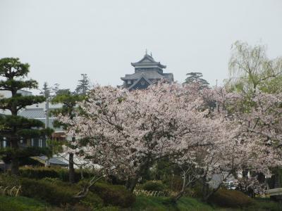 桜満開の松江城と堀川めぐり(鳥取・島根の旅その5)