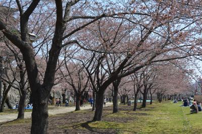 週末プチ旅2014/4平泉&盛岡・サクラ前線北上中!