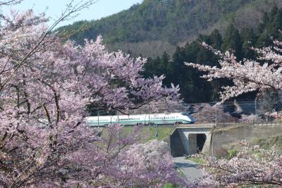 烏帽子山公園(山形県赤湯)の桜と鉄道の旅