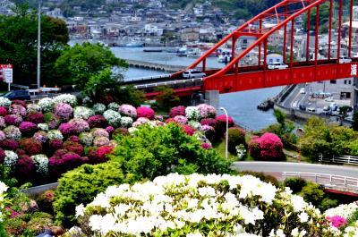 つつじの花が咲き誇る、音戸の瀬戸公園・・