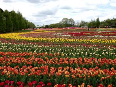 70万本のチューリップの花!・・旅いつまでも・・