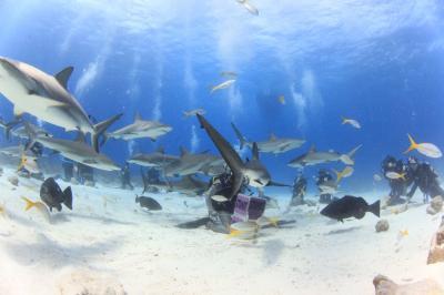 カリブ海バハマでダイビング♪宿泊はATLANTISコーラルタワー(・ω・)/♪