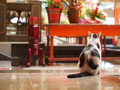 3度めの台湾再訪 Part4 義天宮でネコ歩き