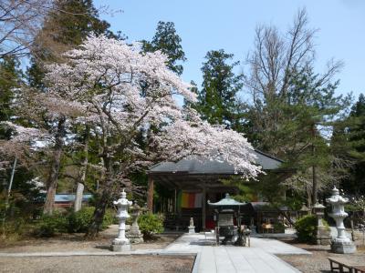 春まっさかりの仙台へ
