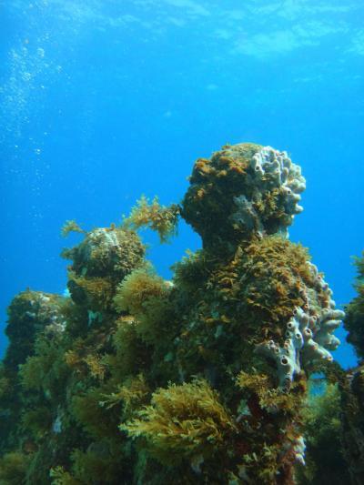 メキシコ カンクン: Playa Delfines,  海底美術館 ダイビング