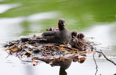 梅雨の合間 水辺で探鳥......