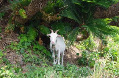 バニラエアで行く奄美(その2)~奄美大島で島じゅうりを味わい、マングローブ散策