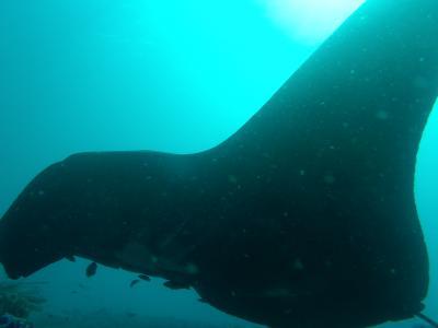 コモド国立公園 Liveaboard Diving Trip 2014 ②