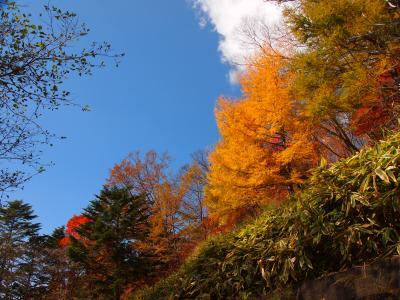 紅葉の男体山 半月山のおまけ付き