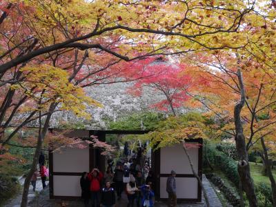 紅葉を見にチョット京都まで【嵐山編】♪初京都は最高に綺麗でした!