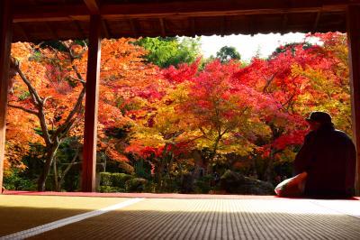 そうだ 京都、行こう。~圓光寺の紅葉を見に~
