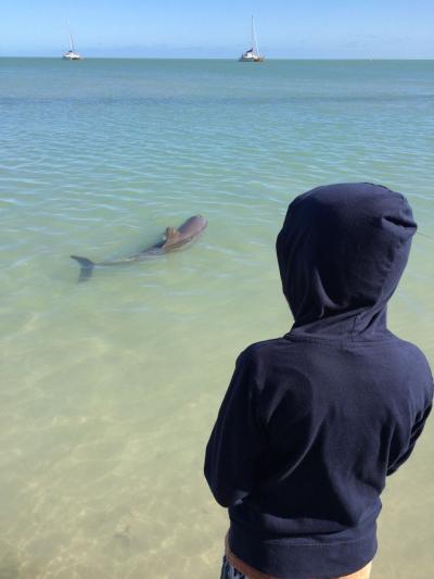 西オーストラリア・長距離ドライブの旅【3】~野生のイルカに餌付け体験、ストロマトライト