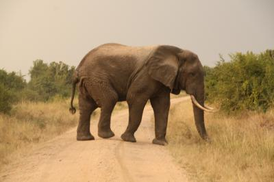 アフリカの真珠へ4 クイーン・エリザベス国立公園 後編 象!フラミンゴ!