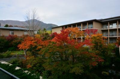 紅葉の箱根ビジターセンター 箱根翡翠 ル・ヴィルギュルのディナー 2014年11月