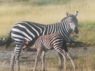 ケニア山国立公園周辺