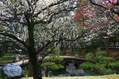 満開の梅を見にふらっと湯島天神へ