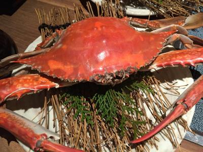 竹崎蟹を食べに九州へ(1日目)