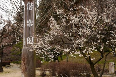水戸偕楽園 梅の花見