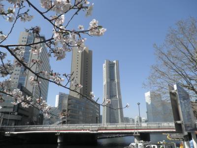 横浜の櫻(2015)その1、大岡川河口