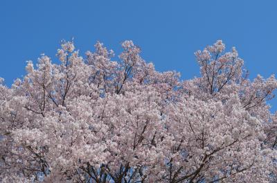 2015年春 東京旅行