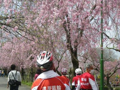 しだれ桜と名古屋市内最高標高地・東谷山