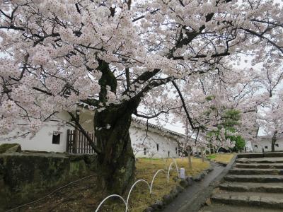 桜満開、小雨の姫路城を往く 後編