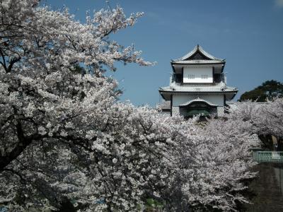 金沢の桜と食を堪能
