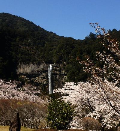 桜の花に囲まれて那智大滝・青岸渡寺・那智大社めぐり