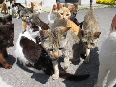 【ネコ、襲来】 男木島(おぎじま)