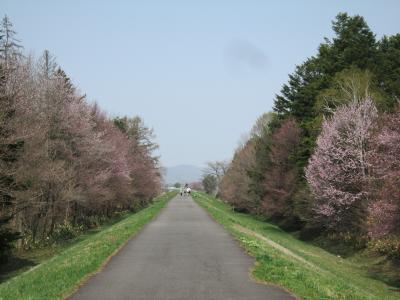 旭川で穴場のお花見~見本林♪