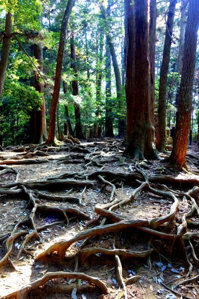 新緑の京都...貴船神社から鞍馬寺へのハイキング☆