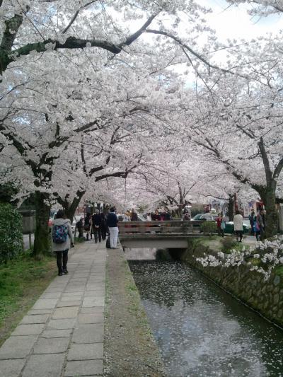 2014春 京都・大阪旅行 京都編