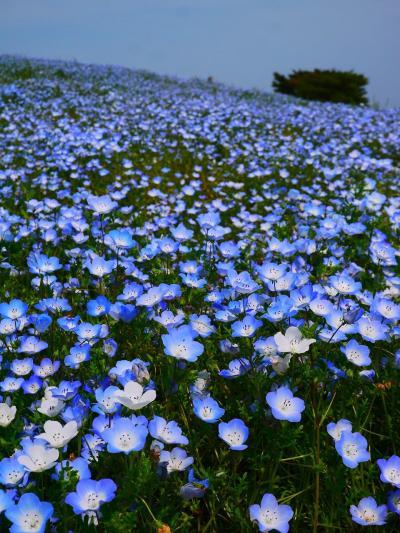 茨城名所巡り「ひたち海浜公園や那珂湊、アクアワールドに袋田の滝」そして栃木も!
